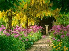 jardin 2
